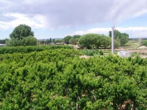 orchard above