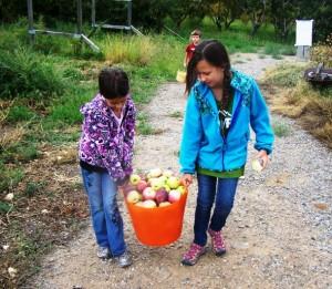 apple basket kids 2