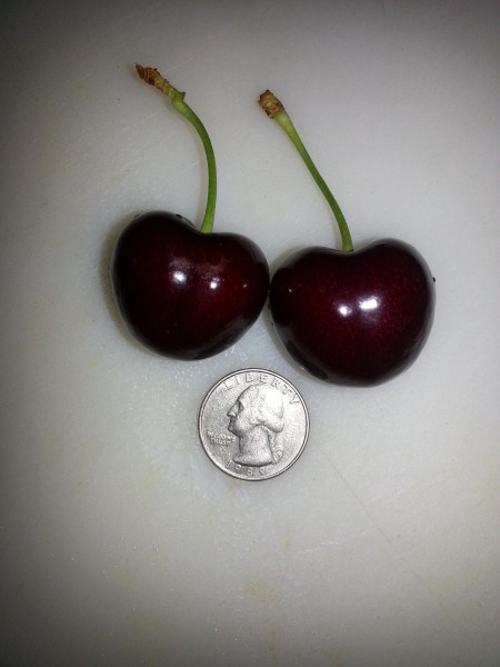 big cherries